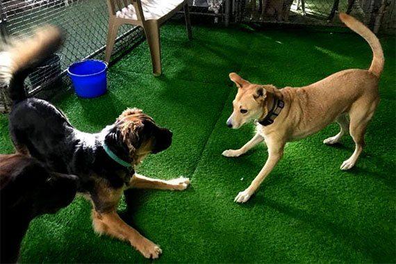 Playtime Carolines Pampered Pet Motel