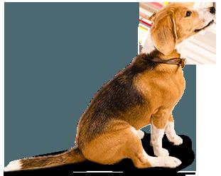 Carolines Pampered Pet Hotel - Testimonials Dog