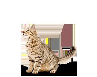 Carolines Pampered Pet Hotel - Testimonials Cat